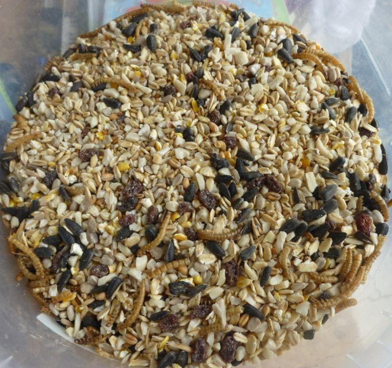 14+ Bird seed cakes recipe ideas