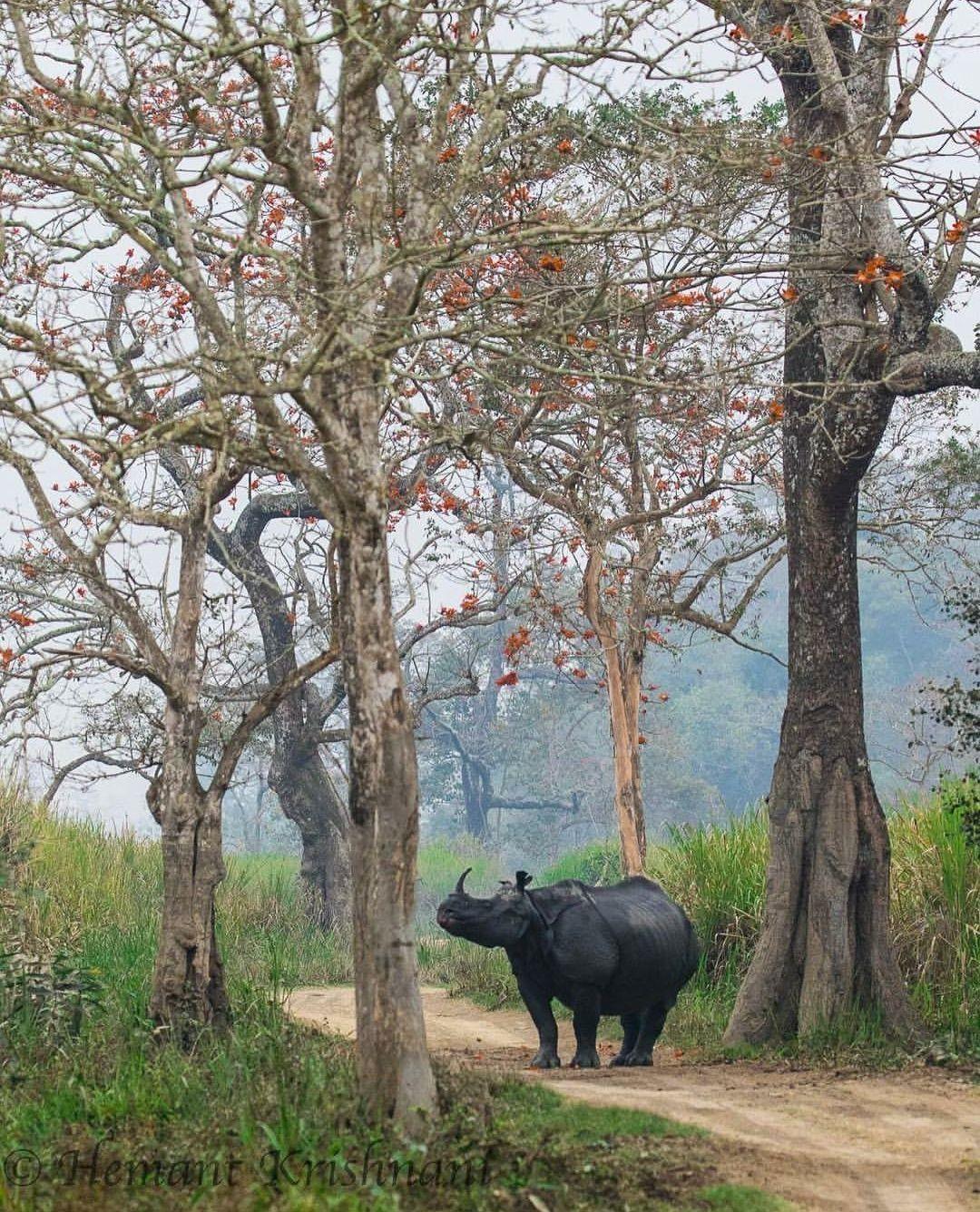 Kaziranga national park , Assam , India. (With images