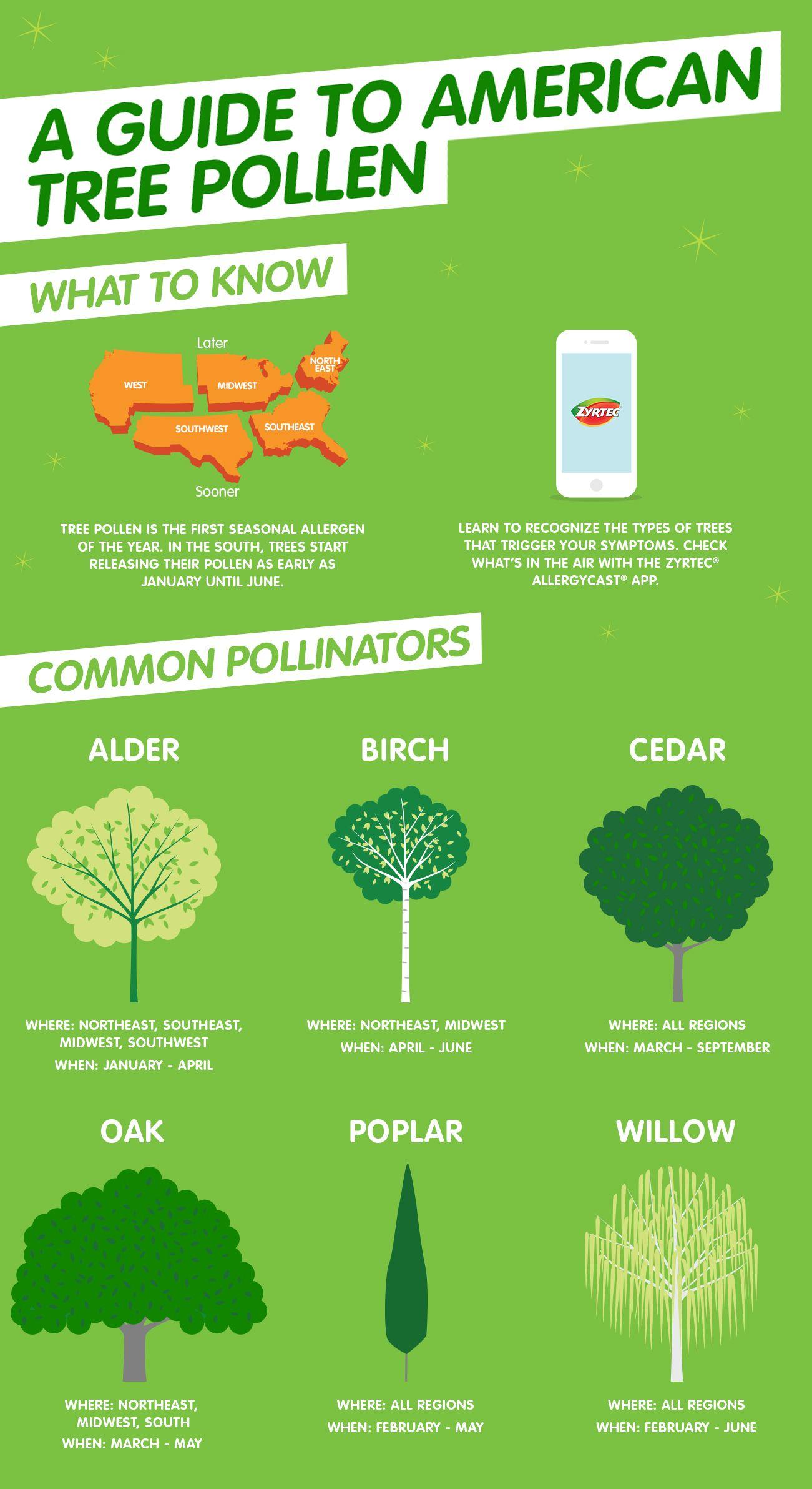 American Tree Pollen Allergy Guide Tree Pollen Allergy Tree Pollen Pollen Allergies