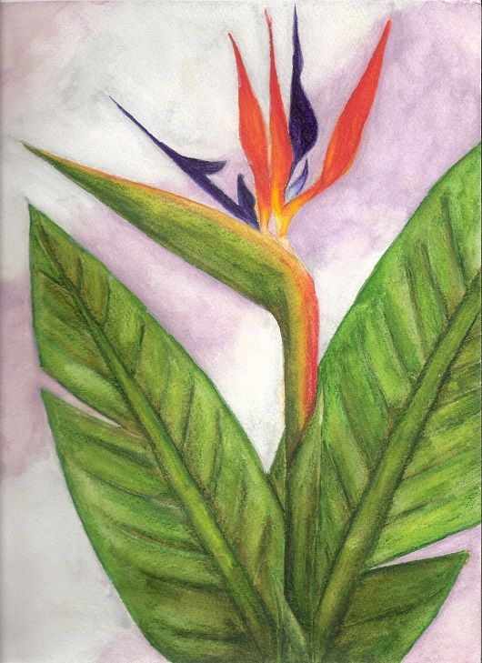 Watercolor bird of paradise
