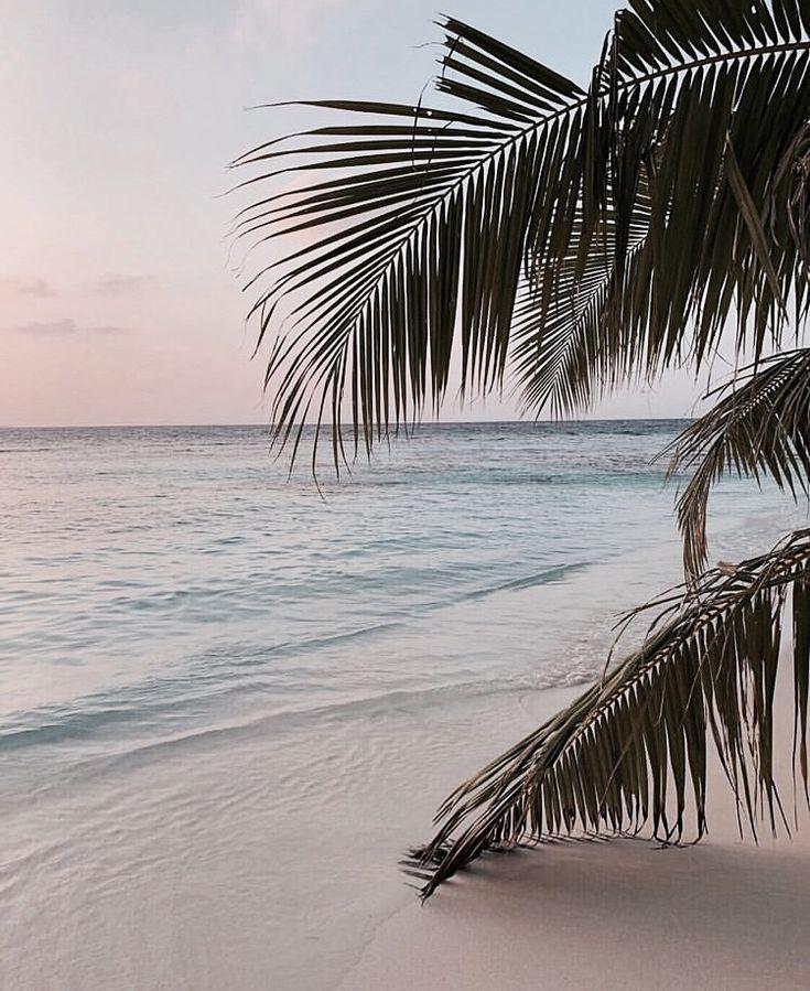 tropical beach | Beach aesthetic, Beach, Beach vibe