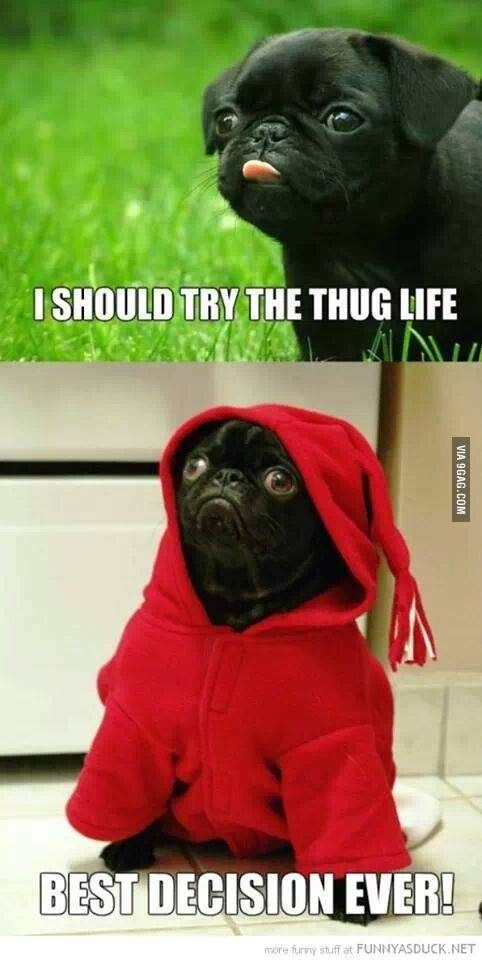 Pug Life Pugs Funny Cute Funny Animals Funny Animal Quotes