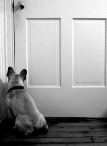 How To Stop Your Dog From Bolting Out The Door 3 Lost Dogs Losing A Dog Dogs Your Dog