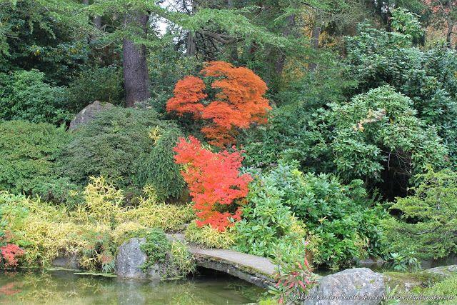 Kubota Garden Seattle Japanese garden, Garden, Plants