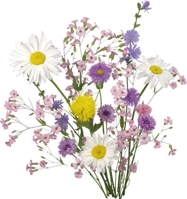 Gut gemocht fleurs des jardins des champs - Page 4 | flowers | Pinterest  UB29