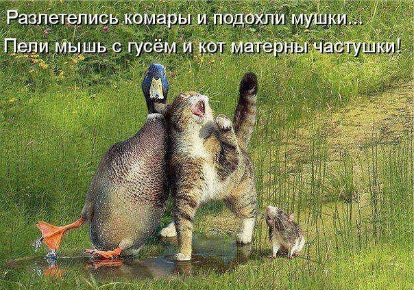Фотография | Самые милые животные, Смешные фотографии ...