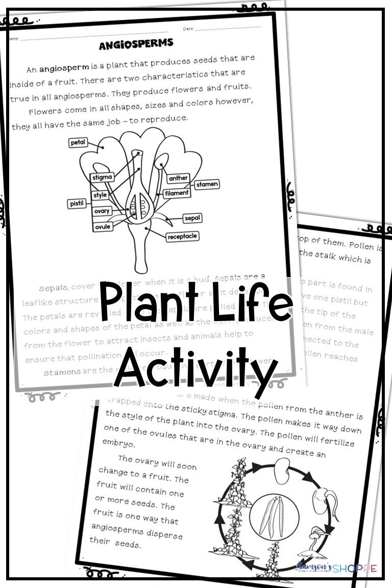 Plant Life Activity   Reading worksheets [ 1152 x 768 Pixel ]