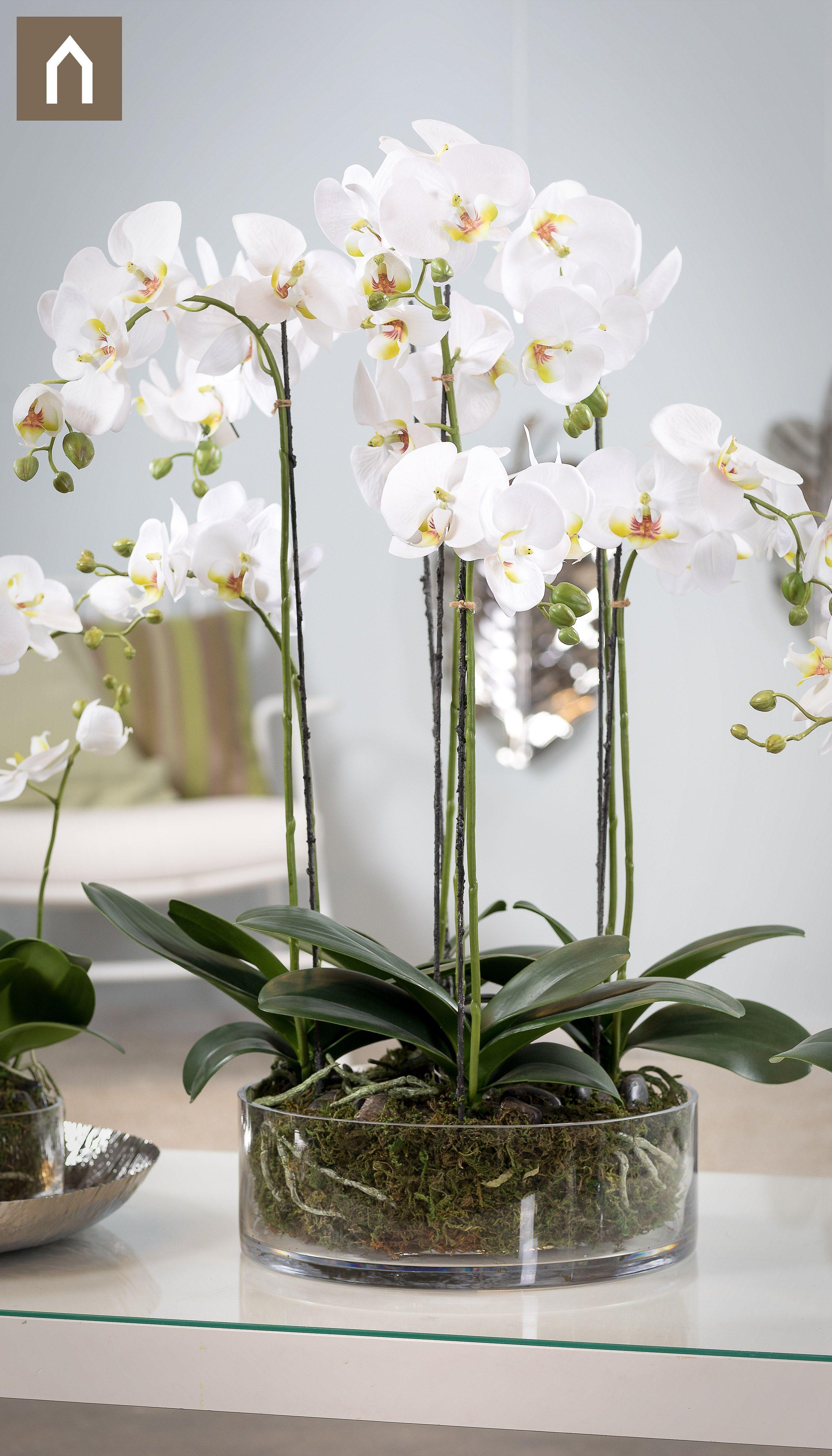 Photo of Orkideer / Phalaenopsis – Fortryllende kopier i gjennomsiktige kar med … – Nye ideer