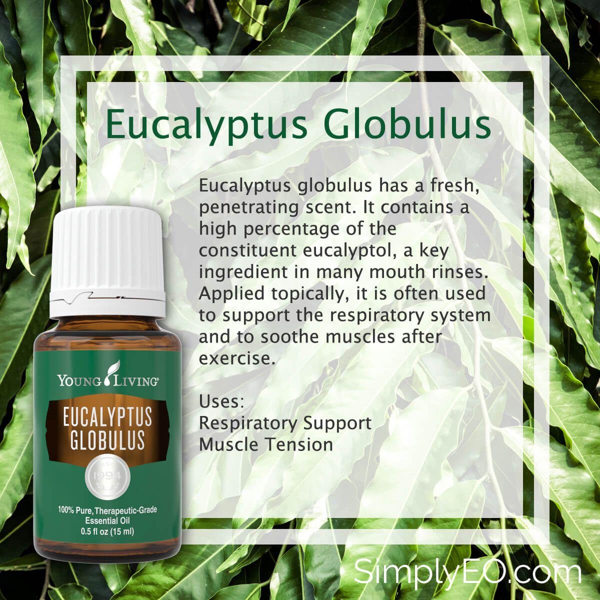 Eucalyptus Globulus 15ml Essential Oil Young Living