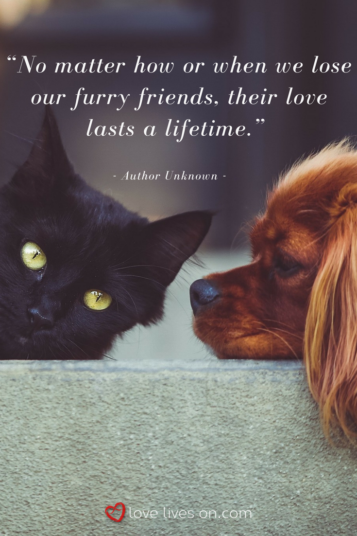 100+ Best Sympathy Quotes | Pet quotes dog, Pet grief, Pets
