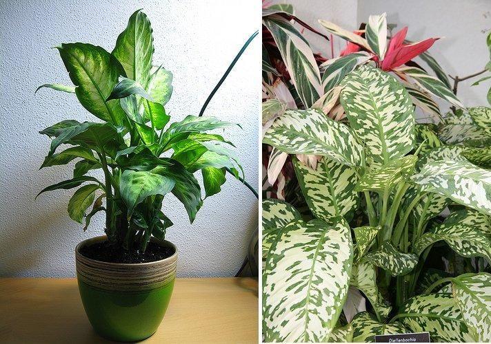 Plantas interior buscar con google plantas plantas for Plantas grandes de interior resistentes