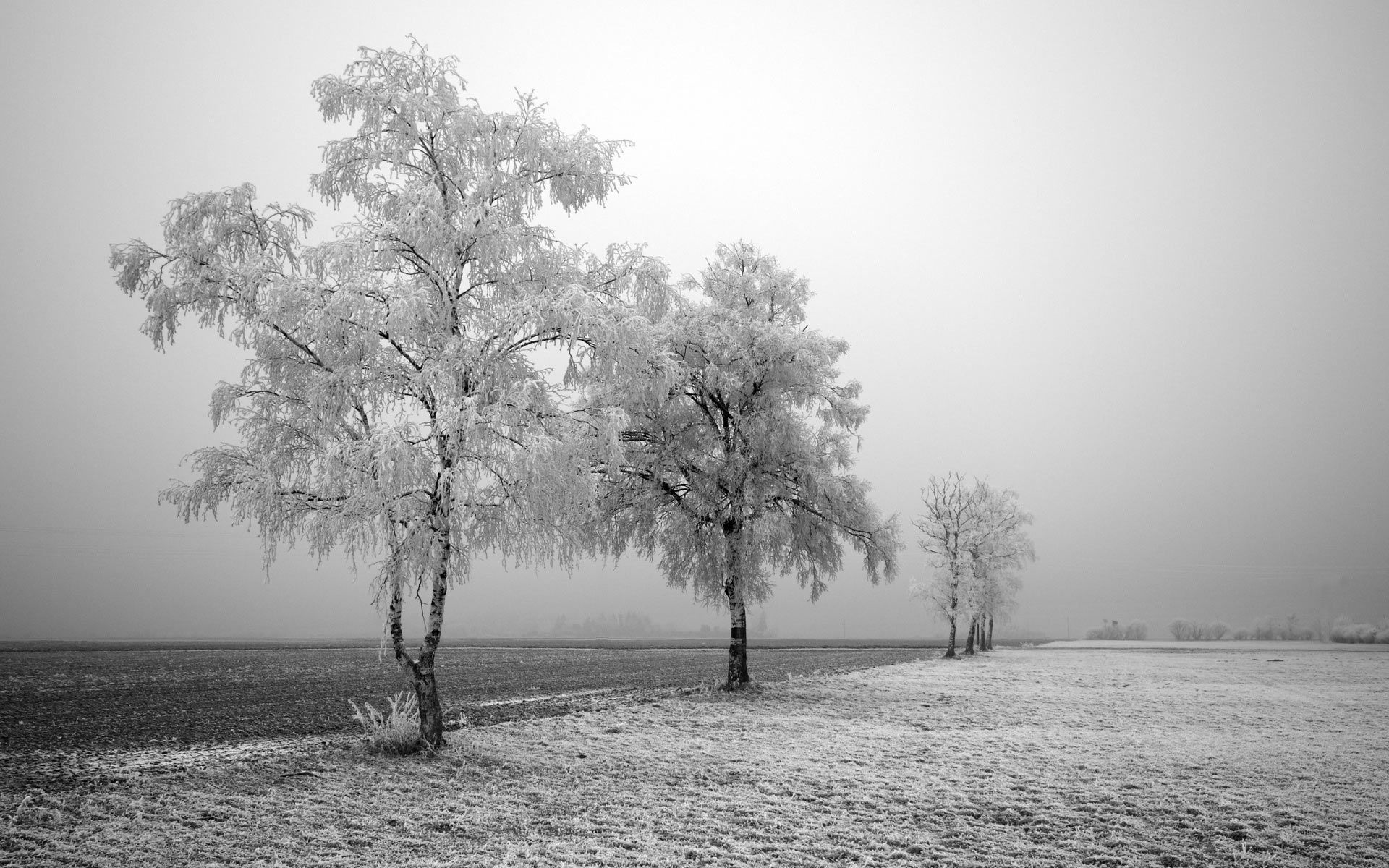 High Resolution Black And White Images Black And White First Frost For High Resolution Hd Wallpaper Winter Landscape Winter Wallpaper Winter Trees