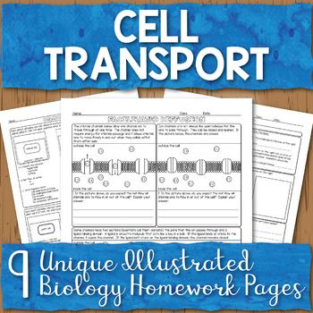 Cell Membrane Transport Unit Homework Page Bundle Science High