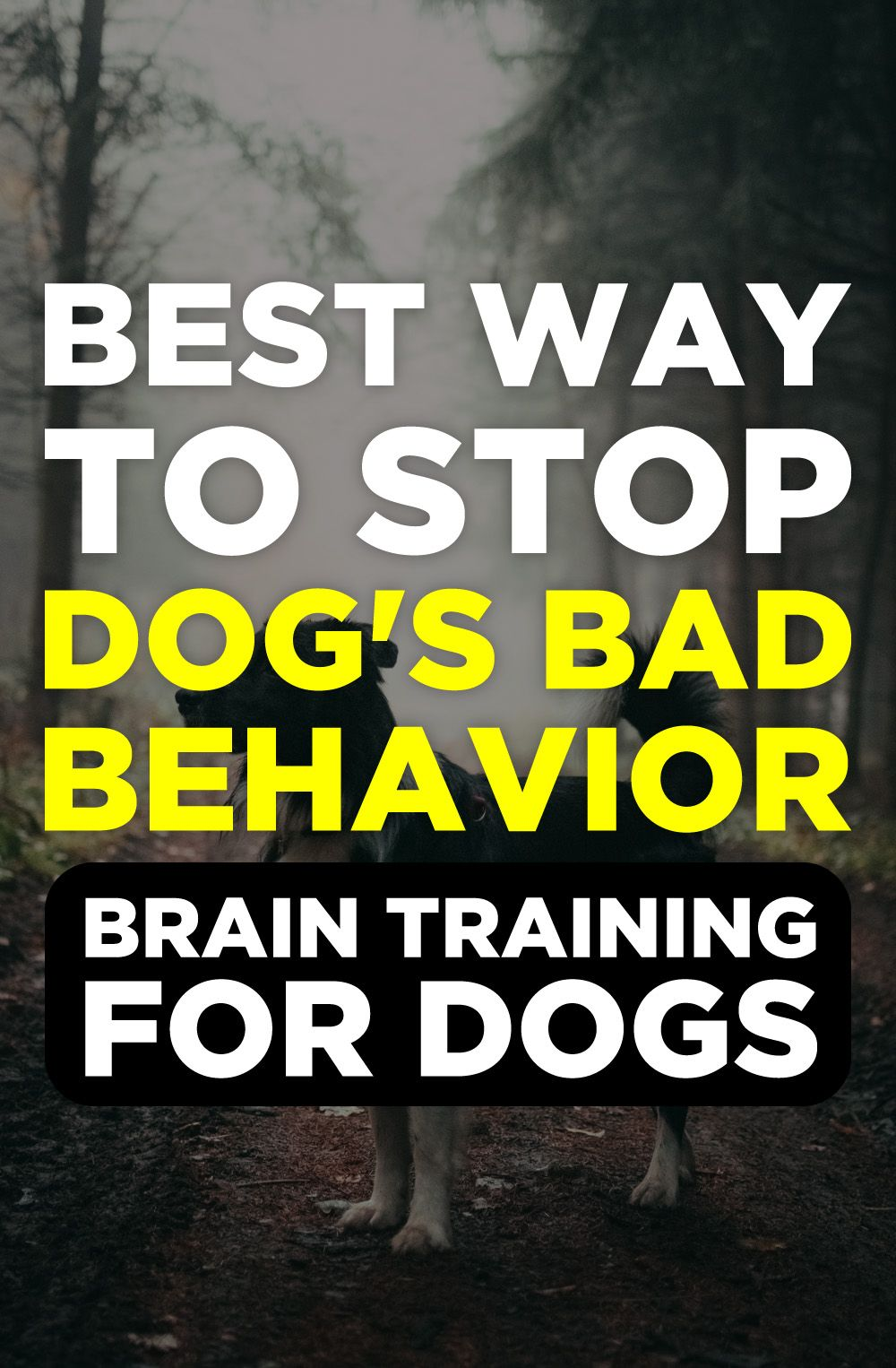 Brain Training For Dogs Review Kennel Training A Puppy Service
