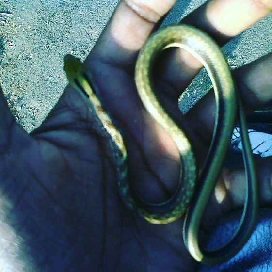 🐍 #oldmemories #snake🐍 #helpanimals #careforthem #happyfeelings #savelife #rescued @kt_design_studi0