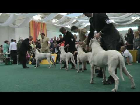 Usa City Of Massillon Police K 9 Unit Inca Dogo Argentino Youtube