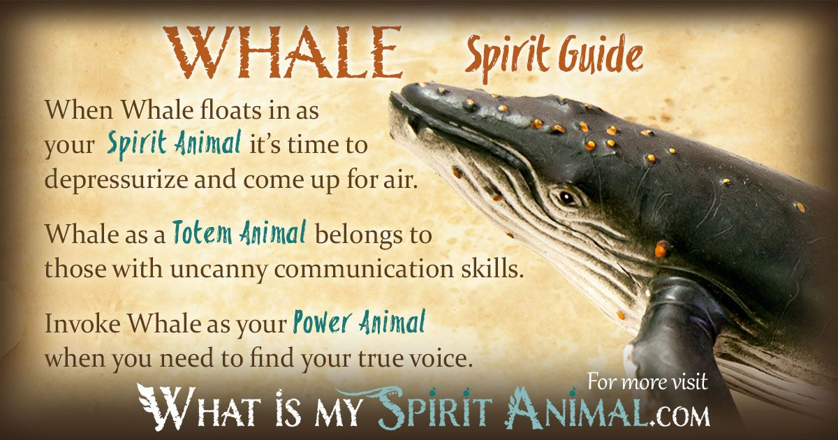 Whale Symbolism Meaning Animal Spirit Guides And Totems
