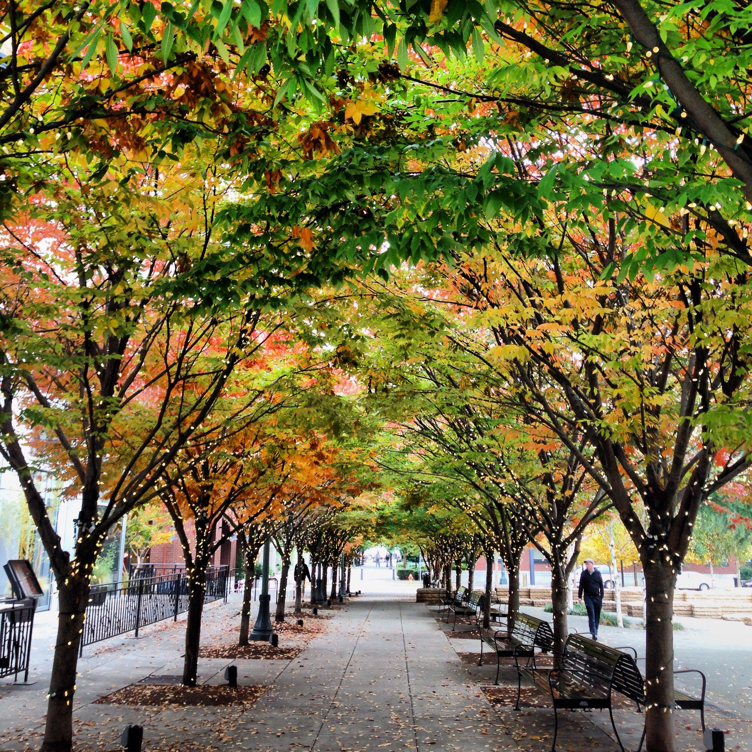 Beautiful Places In Portland Oregon: Autumn In Portland's Pearl District.