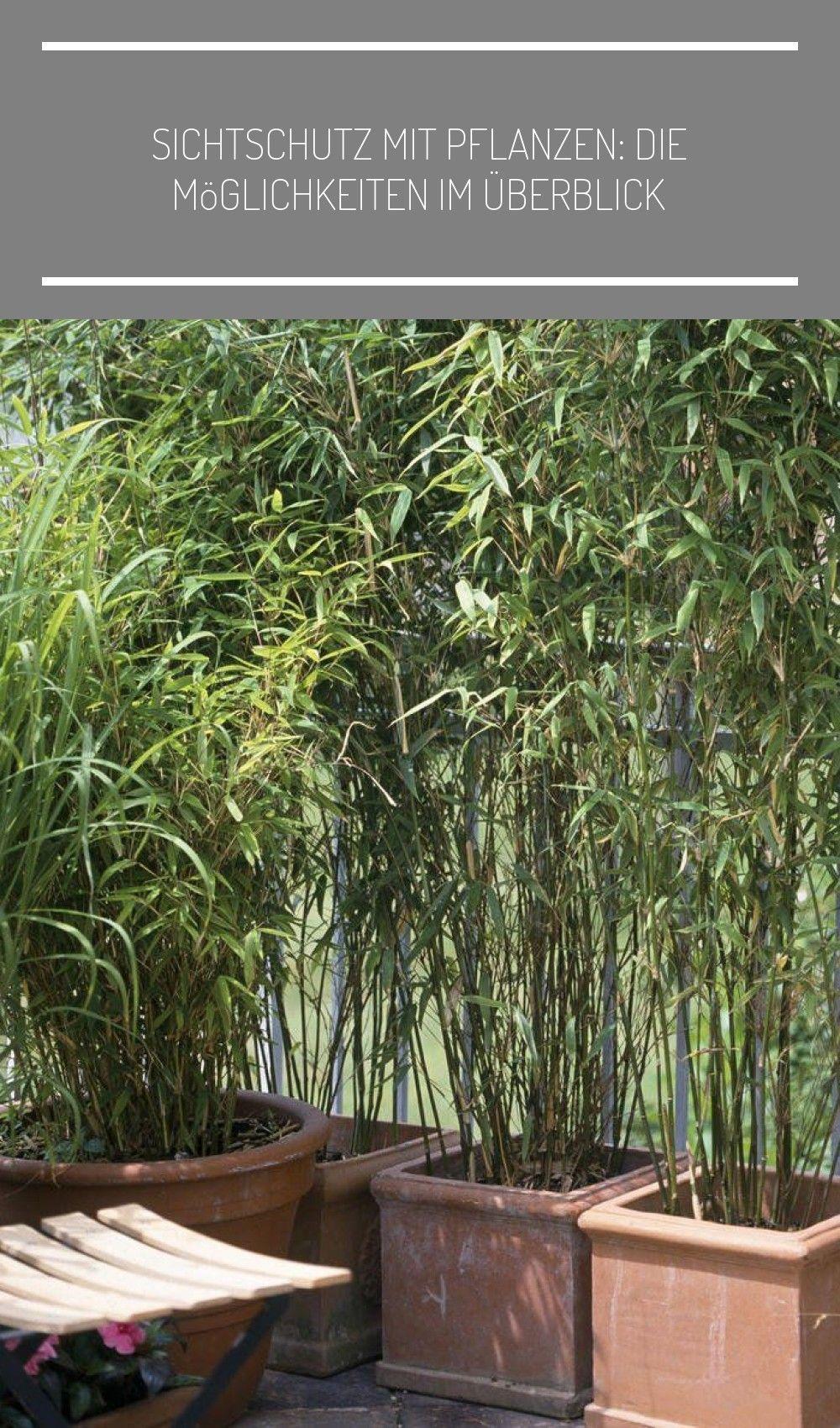 Bambus Ist Nicht Nur Eine Sehr Effektive Sichtschutz Pflanze Er Sorgt Auch Fur Fernostliches Flair Auf Dem Balkon Bambus Sichtschutz Balkon Meinschoenerga In 2020 Garten Und Outdoor Pflanzen Gartenmauer Designs