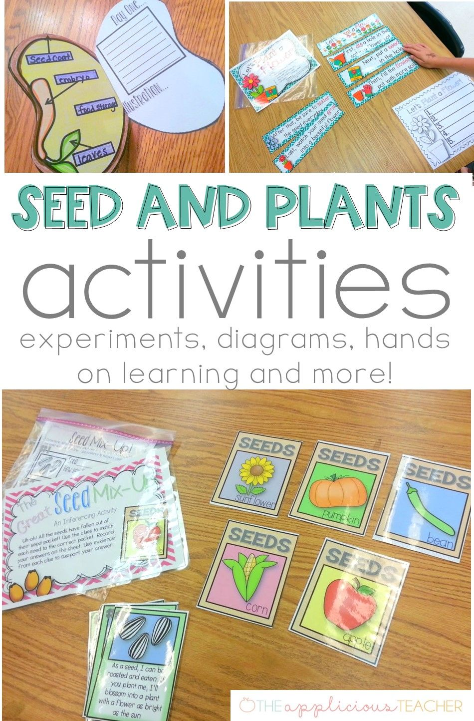 Seed Plant Life Cycle Activities Plant Activities Plant Life Cycle Life Cycles Activities [ 1444 x 950 Pixel ]