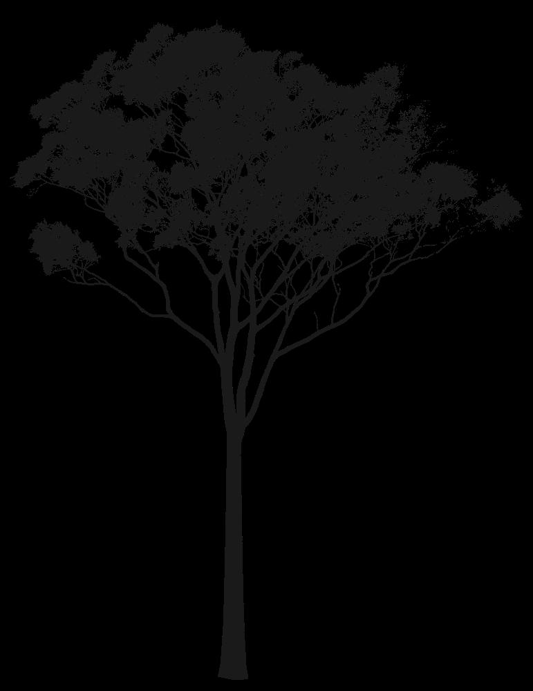 Eucalyptus or Gum Tree Silhouette Australia  Art  Pinterest