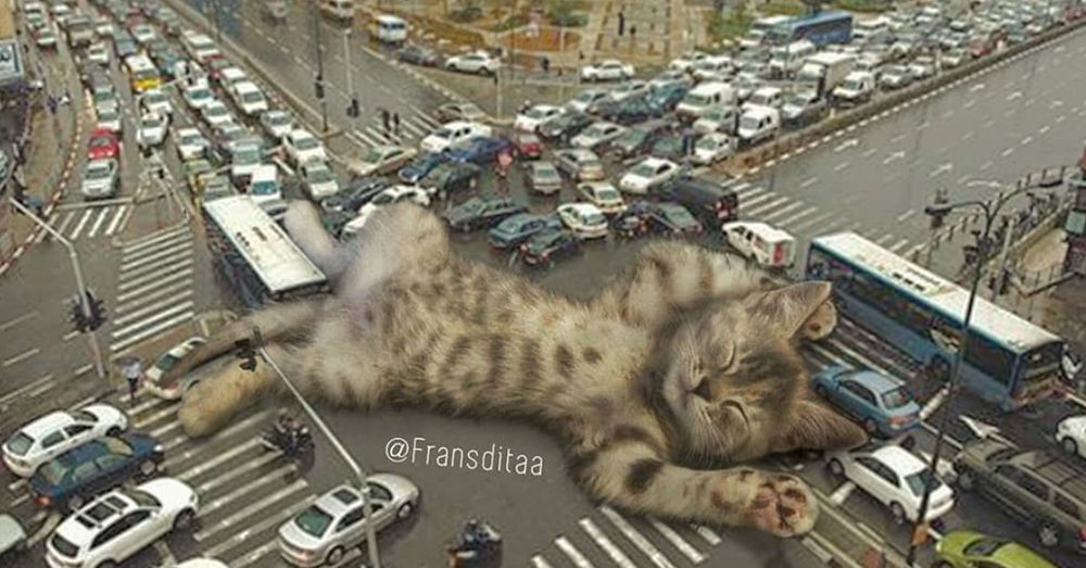 Giant Cats Photoshopped Into These Cinematic Shots Are Our New Favorite Thing Giant Cat Tabby Cat Huge Cat