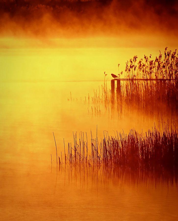 Golden Sunrise by **  REgiNA  **  on 500px