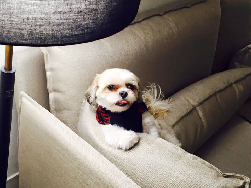 Two Paws Up Delano S Pet Friendly Vegas Hotel Is Worth Barking About Vegas Hotel Pets Las Vegas Hotels