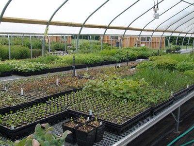 Nasami Plant Nursey In Western M Grows All New England Natives Wuhoo Farm Nurserynative