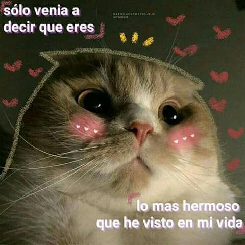 Meme Meme Meme De Amor Memedeamor Tags Memehilarious Memefunny Memebrasileiros Memefaces Memeparacon Animales Frases Memes Lindos Frases Gatos