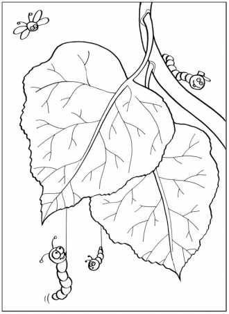 Раскраска растения дерево береза, распечатать | Раскраски ...