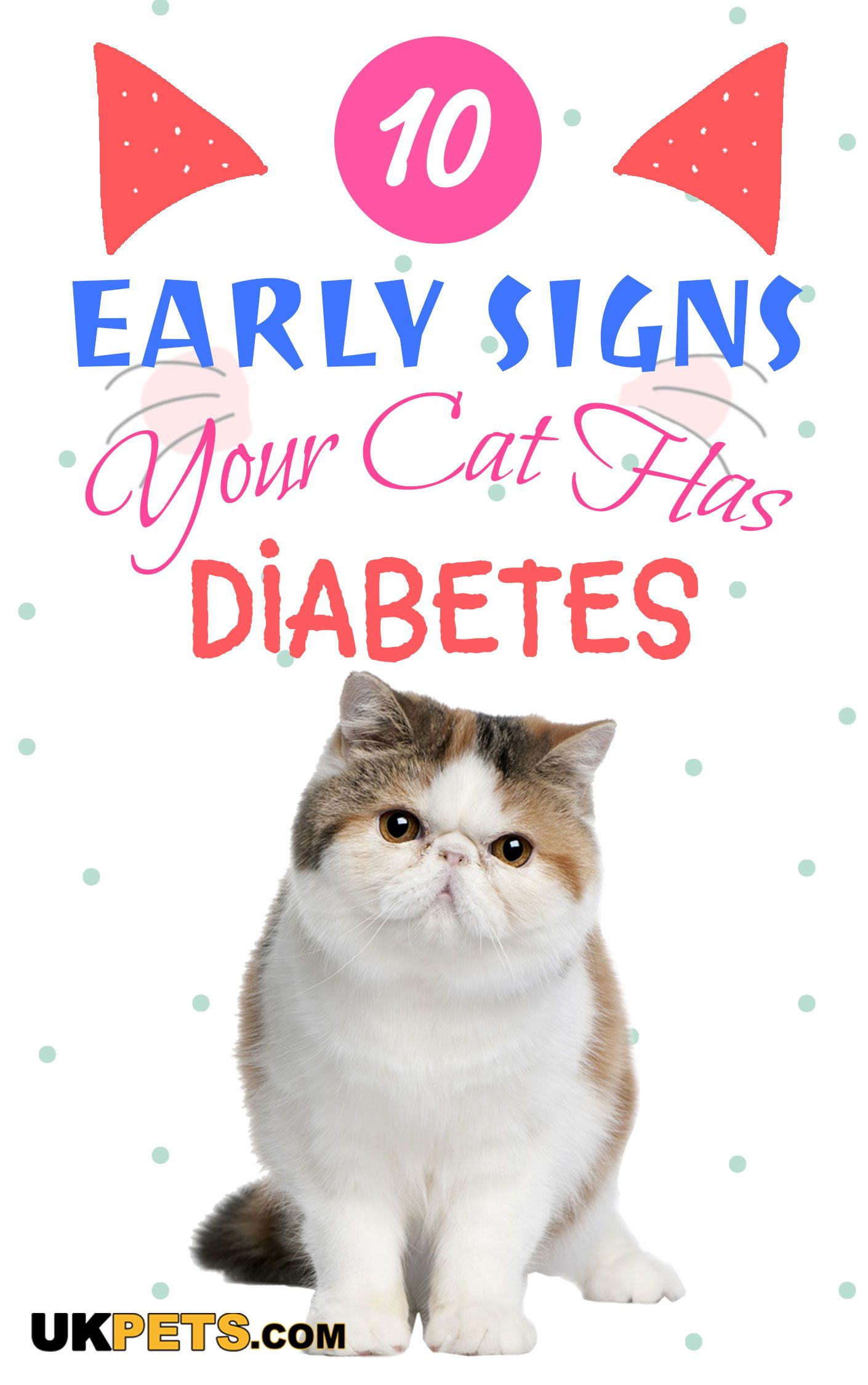 10 Early Signs Your Cat Has Diabetes With Images Diabetic Dog