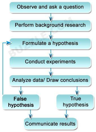 Steps Of The Scientific Method Scientific Method Scientific Method Steps Scientific