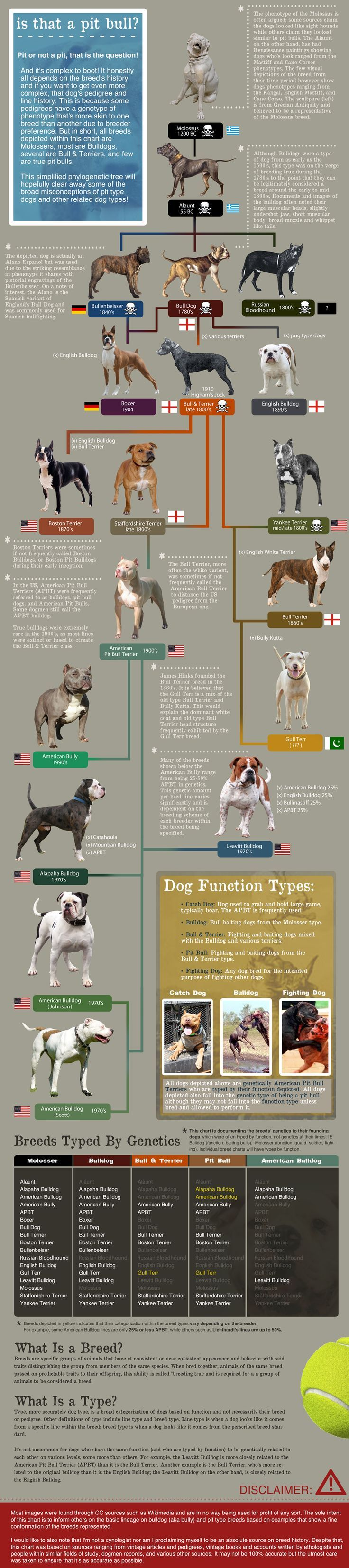Phylogenetic Pit Bull Tree by @deviantART | Dog Breeds