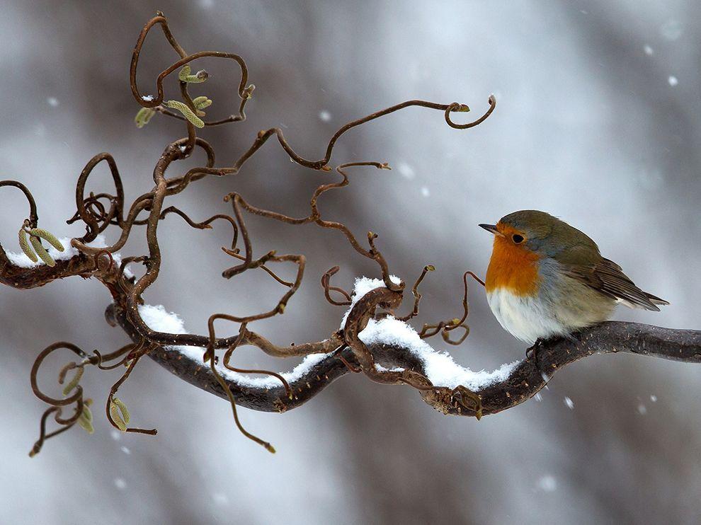 utk tun utktun twitter beautiful birds birds