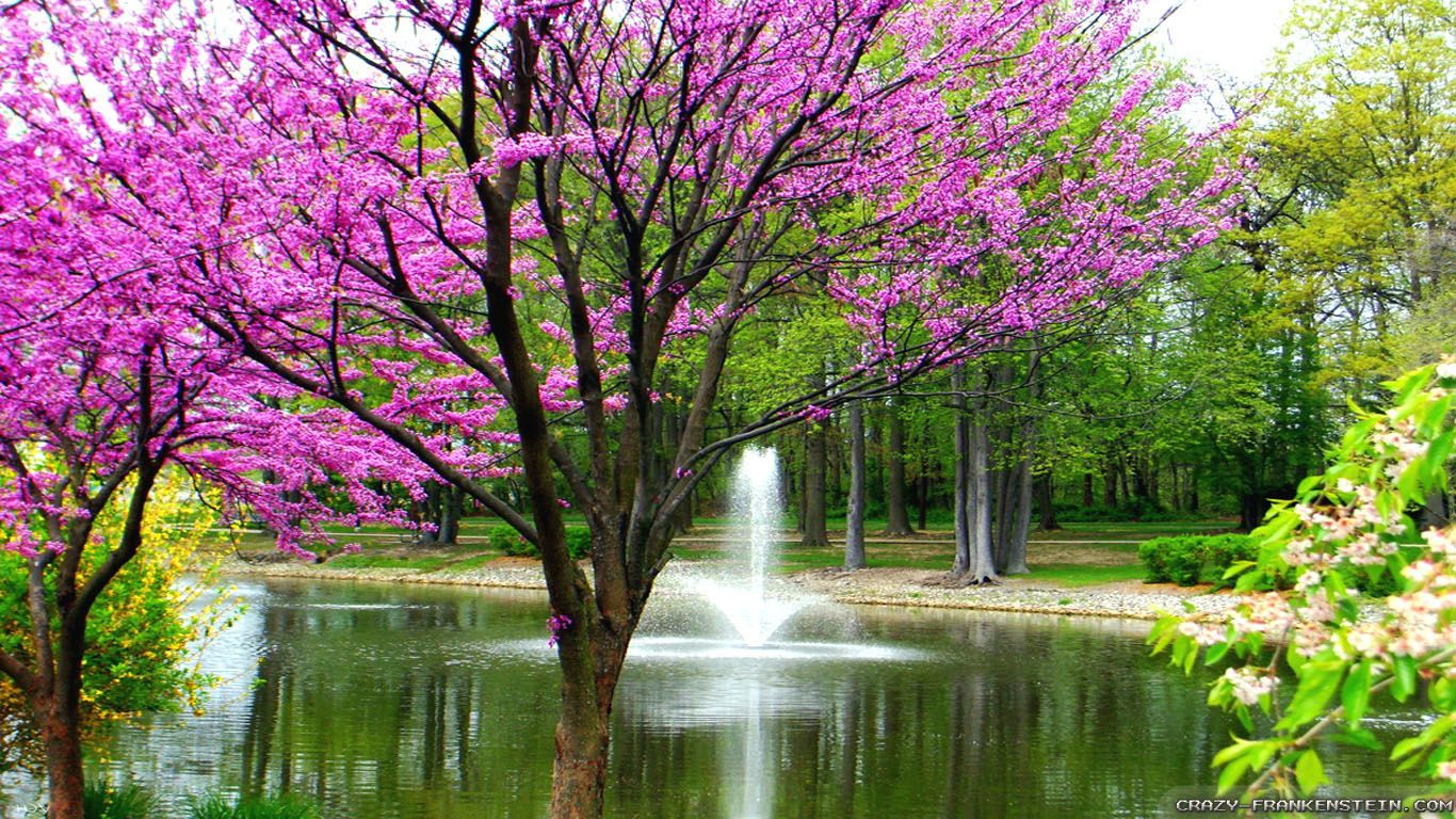 Nature Spring Beautiful Desktop Wallpaper
