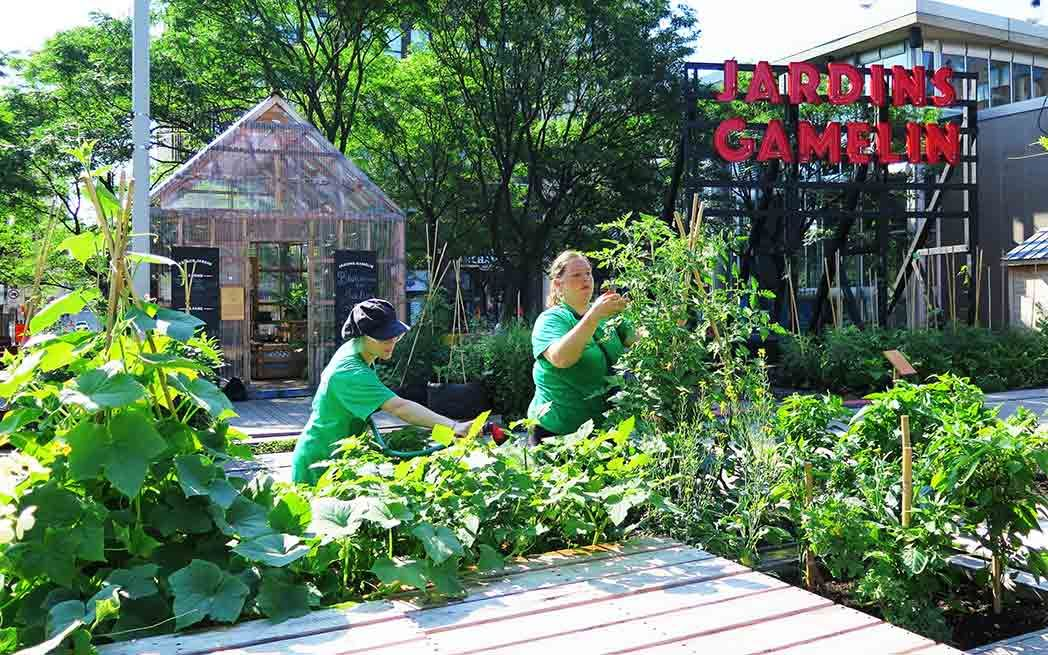 A Garden Oasis In The Heart Of Montreal Environment