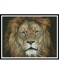 Lion Face 2