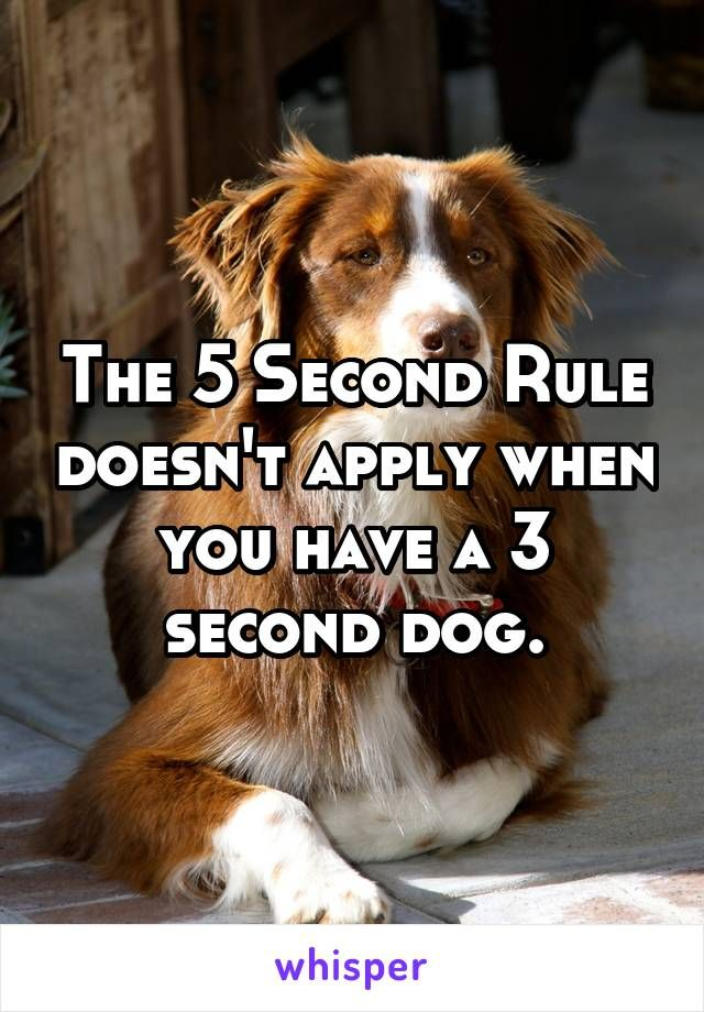when to get a second dog