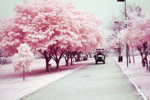 Hasil gambar untuk tumblr pink photography