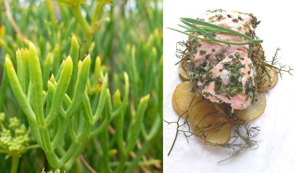 La criste marine est une plante qui pousse exclusivement - Association plantes aromatiques entre elles ...