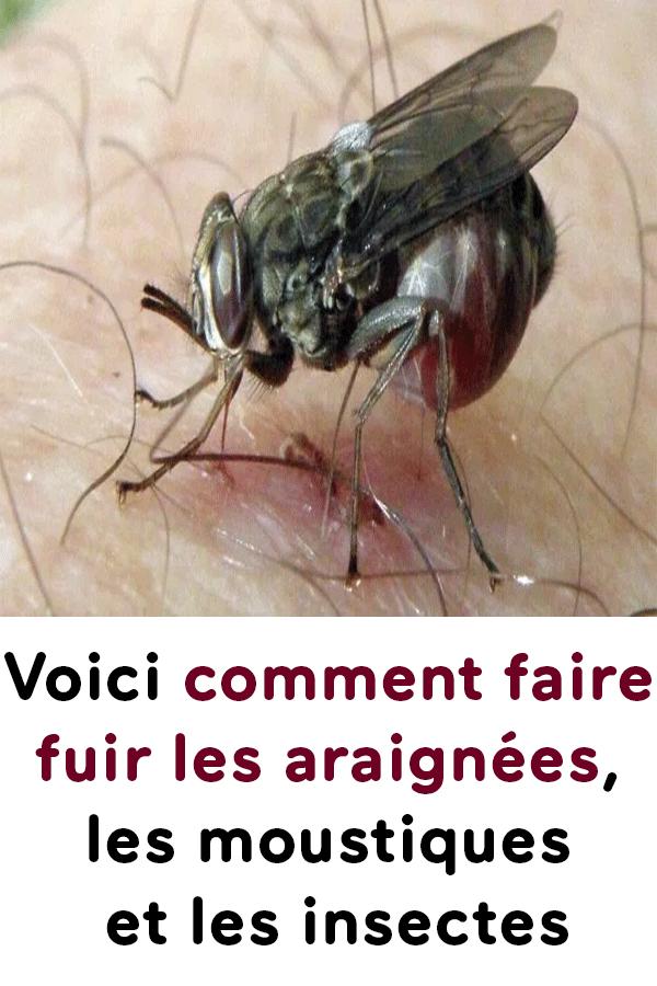 Comment Faire Fuir Les Mouches : comment, faire, mouches, Voici, Comment, Faire, Araignées,, Moustiques, Insectes, Insects