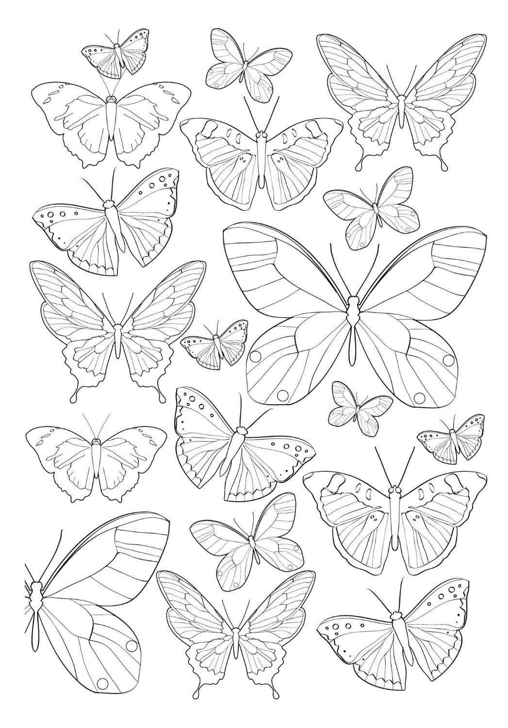 Related Image Butterfly Drawing Butterfly Coloring Page Butterfly Art [ 1500 x 1047 Pixel ]