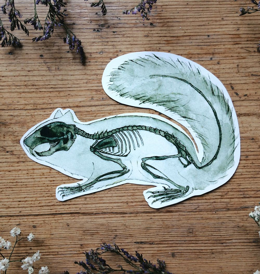 Sticker Of Squirrel Skeleton Anatomy Painting Made By Me Decorate