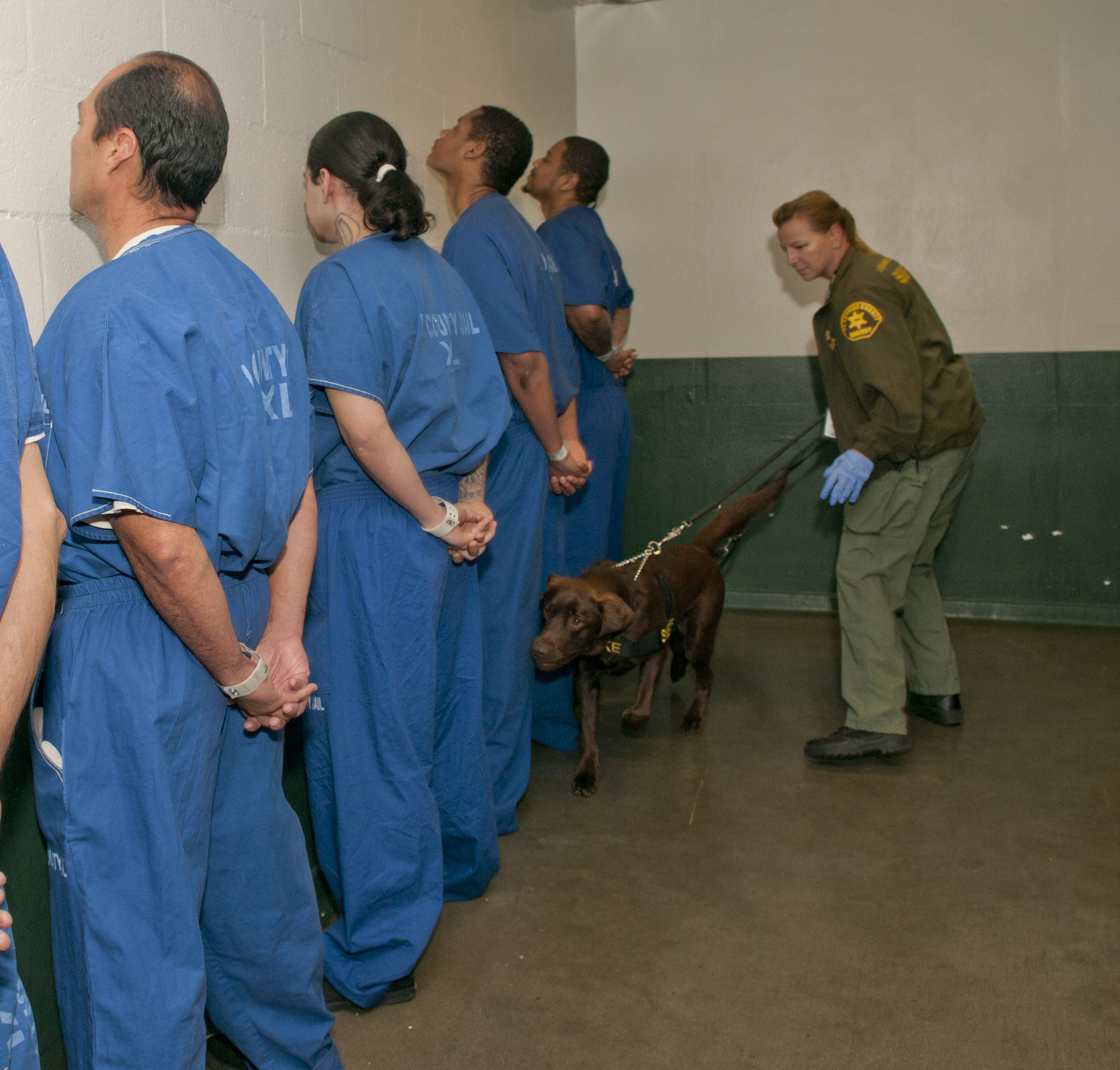 Dog Search Lasd County Jail Los Angeles County Dog Search