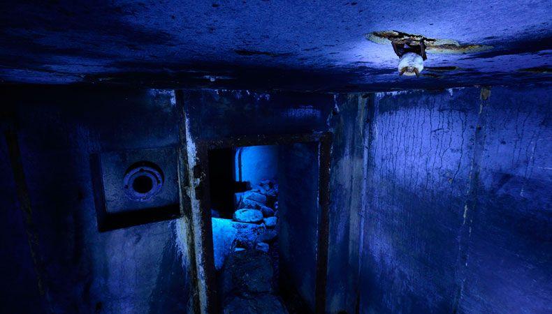 .. das Verhalten von überwinternden Fledermäusen - die auch in den Bunkern Schutz suchten. Um die unheimliche Atmosphäre noch zu unterstreichen, beleuchtete er mit dem Blitz seiner Kamera eine von der Decke hängende Fledermaus und stellte die kaltweiß Balance ein.