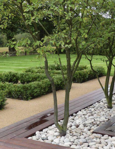Luciano Giubbilei mehrstämmige Bäume Pinterest Gartenideen