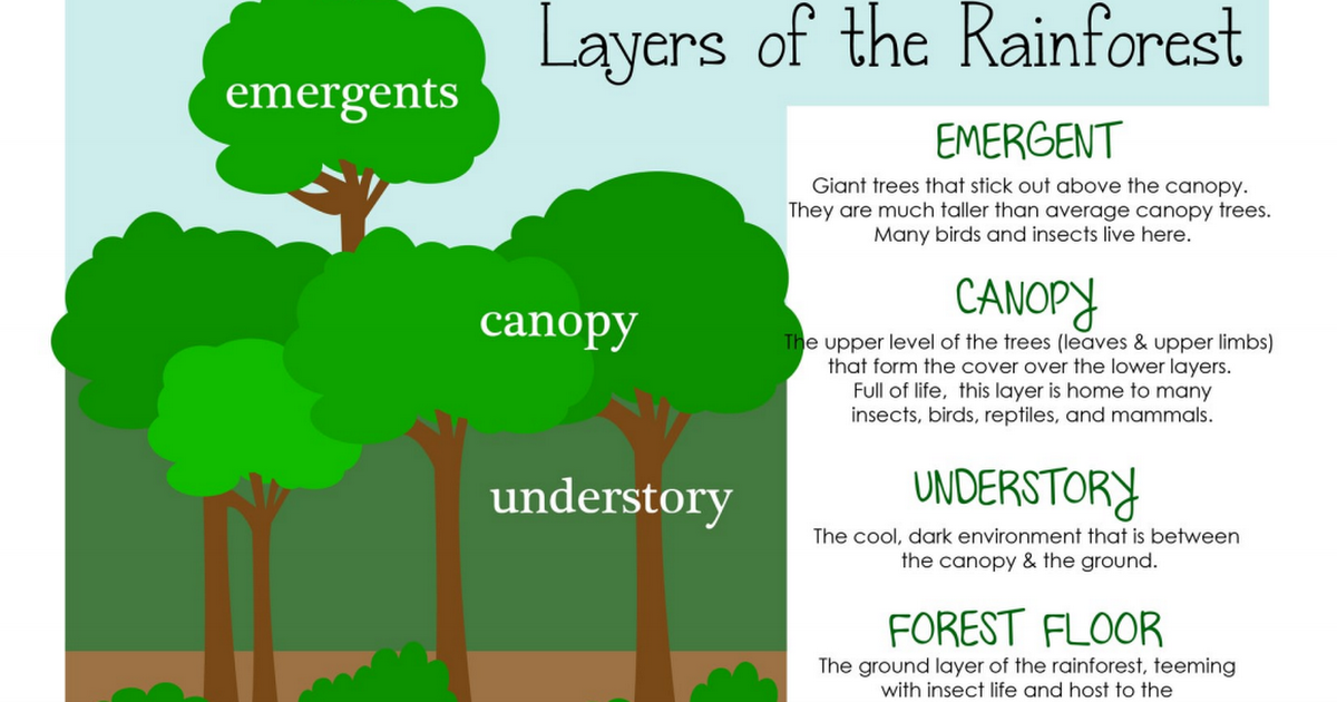 rflayers.pdf (With images) Rainforest classroom