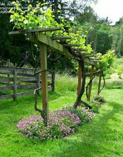 deco jardin vigne