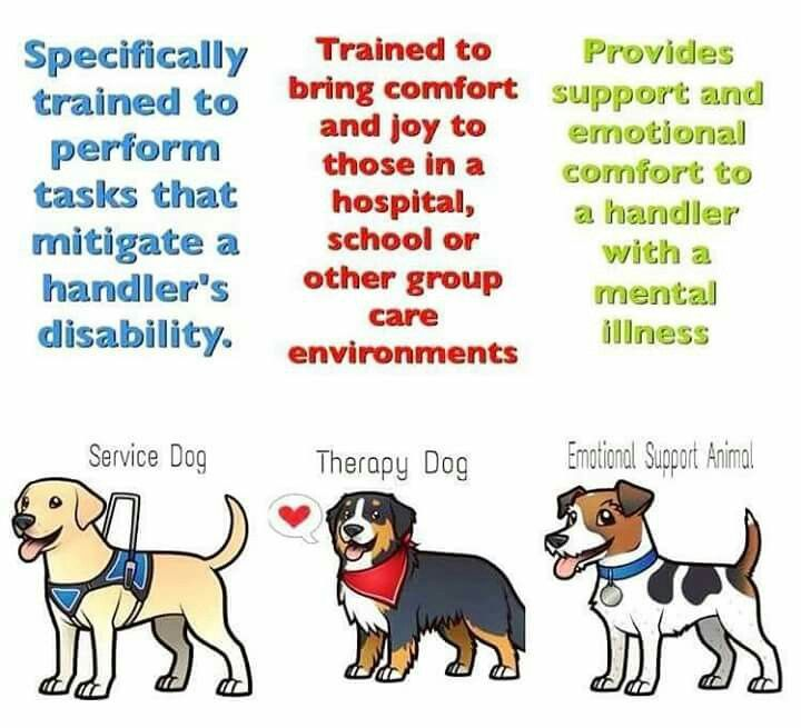 Dogs Image By Jenn Zieska Service Dogs Emotional Support Dog